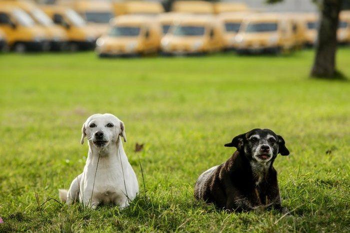 Justiça proíbe remoção de duas cachorras de complexo dos Correios