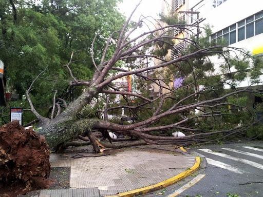 Sem podar árvores, município é obrigado a indenizar acidente de trânsito