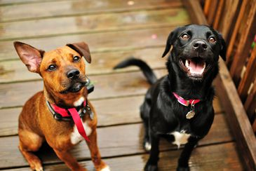 """Cachorros não podem constar como parte em ação judicial. """"Sem invenções ou gracinhas"""", diz TJ-SP"""