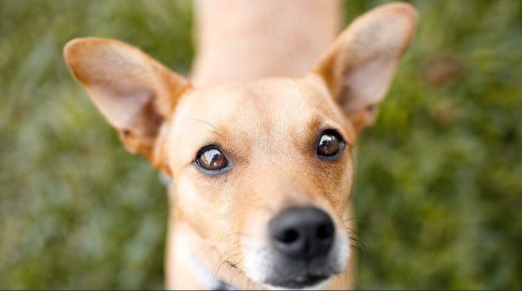 DECISÃO INÉDITA: Publicado acórdão que reconhece capacidade de cães serem parte em processo